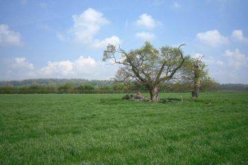 Rural Planning